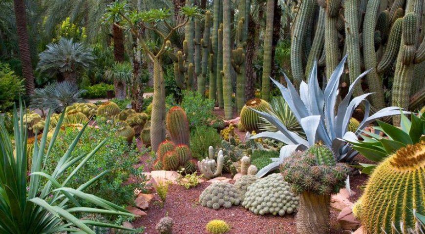 Jardín-Artístico-Nacional-Huerto-del-Cura-Elche-870x480