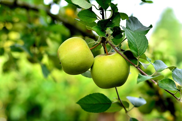 apple-3866387_640