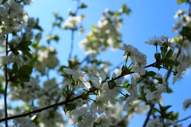 flowers-2249317_640