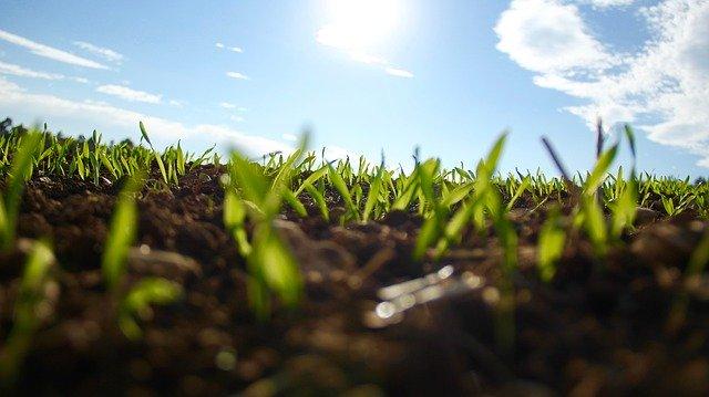 grass-1148913_640