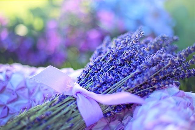 lavender-2482374_640