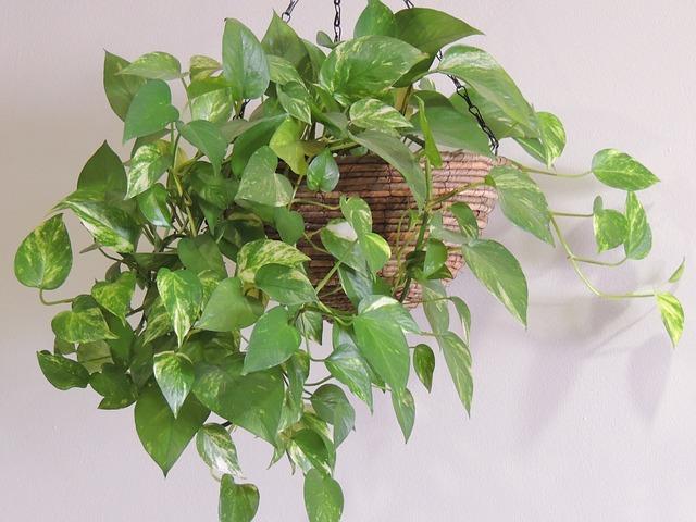 plant-344413_640