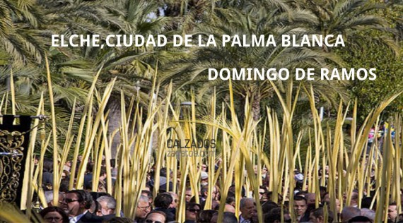 The white palm: from Elche to the world.